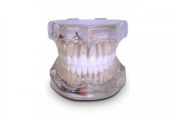 endodontiaED9B8D03-B8E2-96B9-52D3-192AEF672C85.png