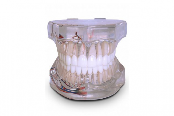 endodontiaed9b8d03-b8e2-96b9-52d3-192aef672c853AD48F42-AAE2-2AF0-07D9-A3E6D66ABA34.png